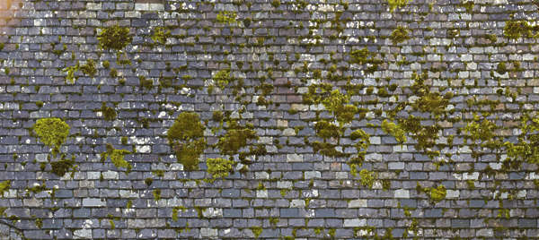 roof roofing rooftiles slate old medieval moss mossy