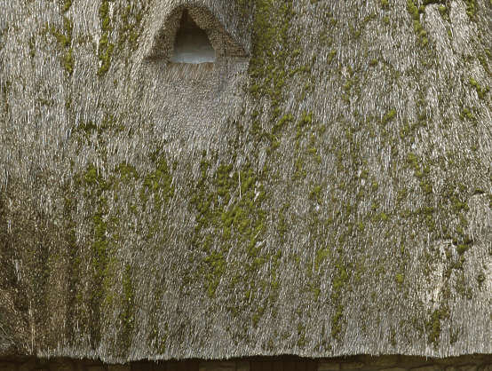 thatched roof roofing moss