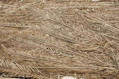 roof roofing palm leaf thatched tropical