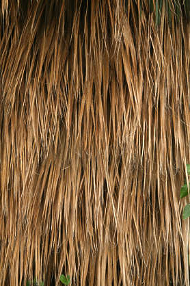 thatched reed palm roof roofing