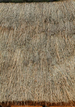 roof roofing thatched reeds reed