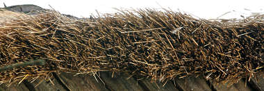 roof roofing thatched reeds reed side