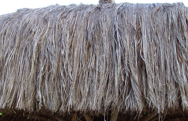 thatched reed reeds roof roofing