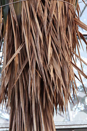 palm tree reeds roof roofing thatched