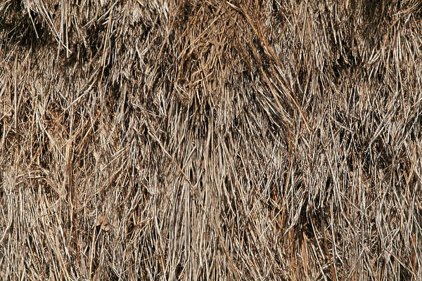 thatched roof roofing reed