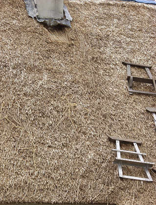 thatched roof roofing reeds