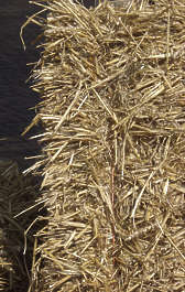 thatched roof roofing reeds hay
