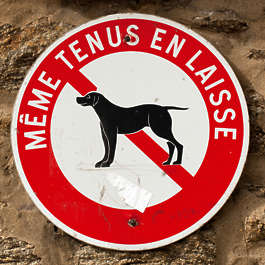 sign forbidden dogs dog