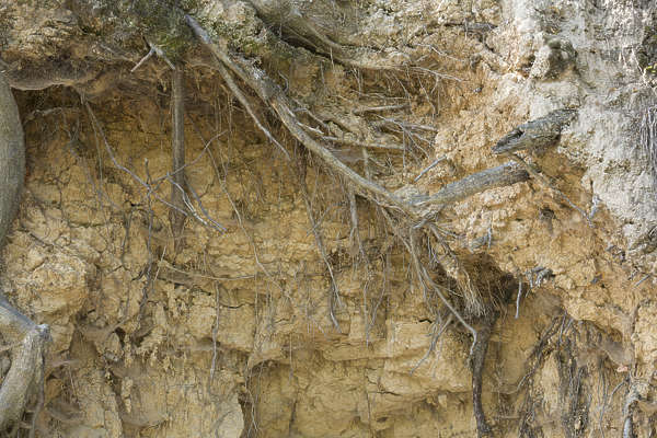 earth cliff ground soil roots