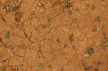 sand ground earth cracked plants