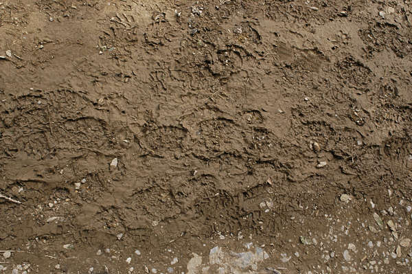 sand earth ground mud footsteps