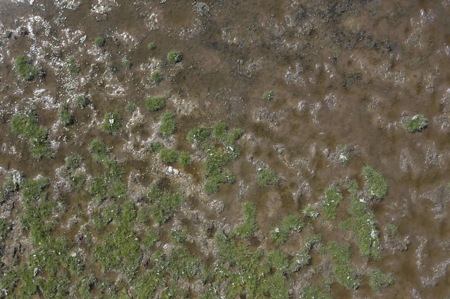 Soilmud0082 Free Background Texture Aerial Grass Wet