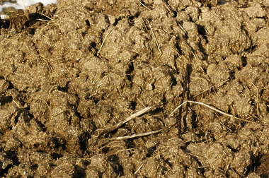sand earth ground manure shit poop dung