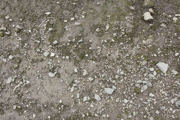 Sandpebbles0029 Free Background Texture Ground Terrain