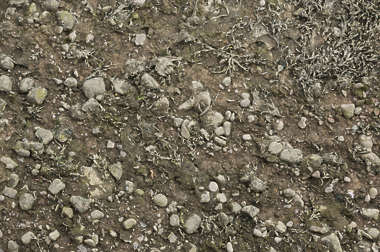 UK mud pebbles