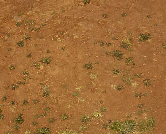 sand ground earth plants