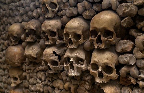 Bones0077 Free Background Texture Bones Skull Skeleton