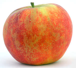 fruit apple elstar food foodstuff