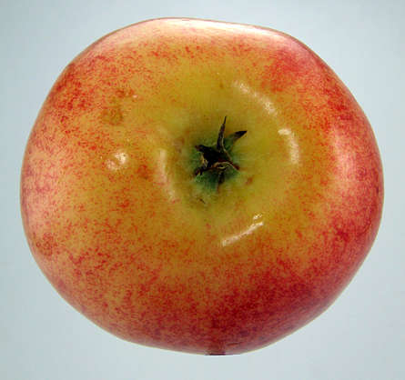 food foodstuff apple fruit