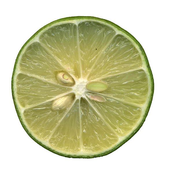 Fruit0040 Free Background Texture Fruit Sliced Lemon