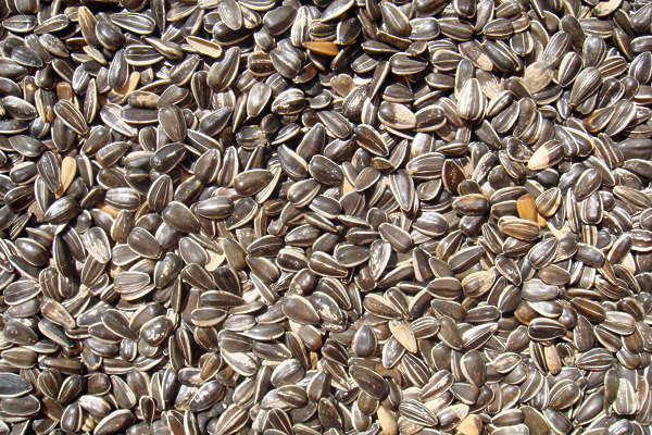 food seed seeds foodstuff