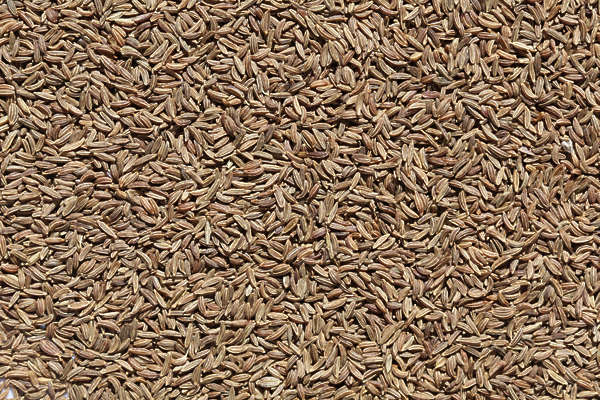 spice spices Caraway