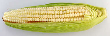 food foodstuff vegetable corn