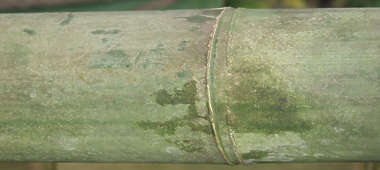 wood bamboo closeup