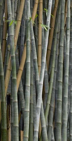 WoodBamboo0024 - Free Background Texture - bamboo stems ...  WoodBamboo0024 ...