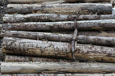 wood sticks stack log logs