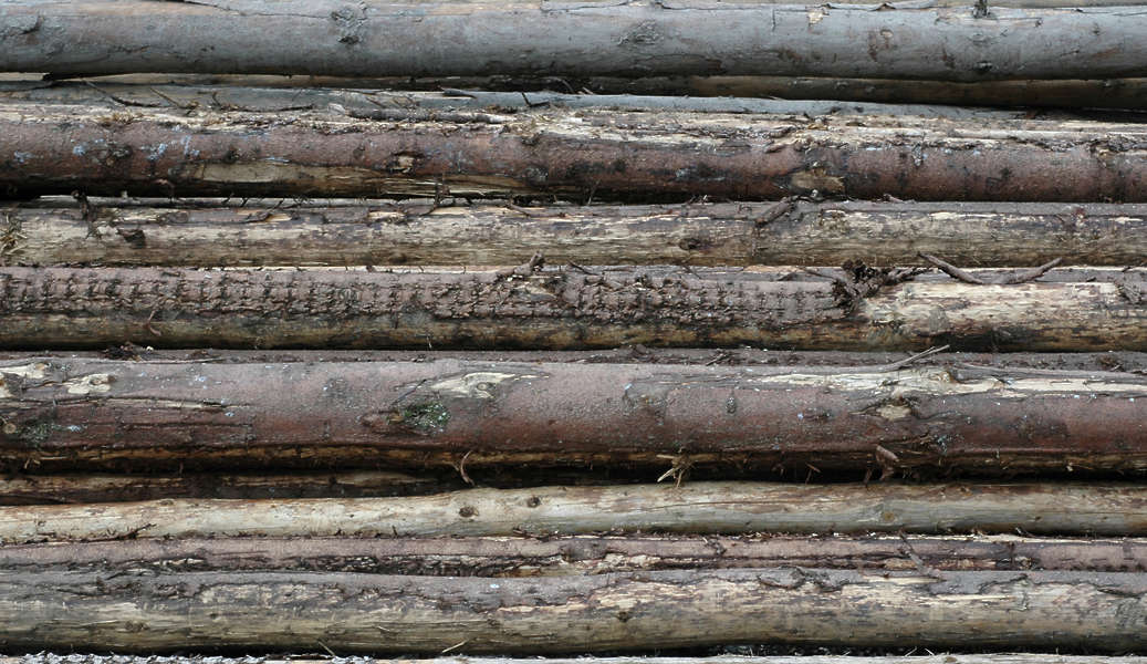 Woodlogs free background texture wood sticks stack