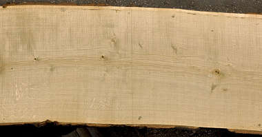 wood plank tree cut new