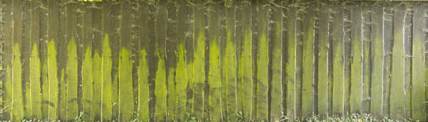 wood planks mossy dirty old siding