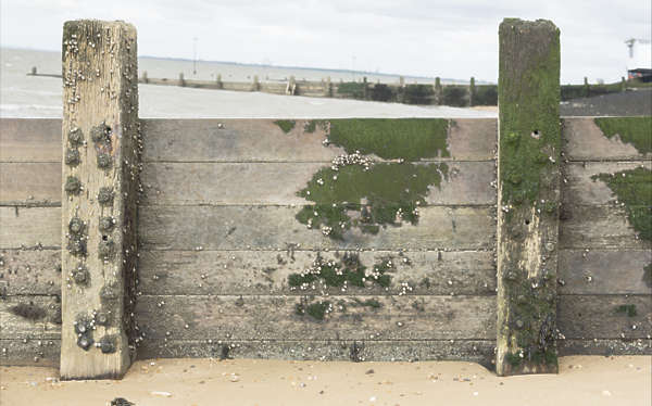 UK wood planks mossy coastal fence