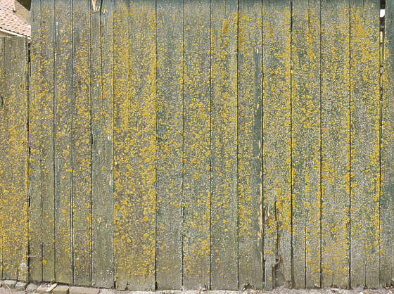 wood planks painted mossy dirty siding