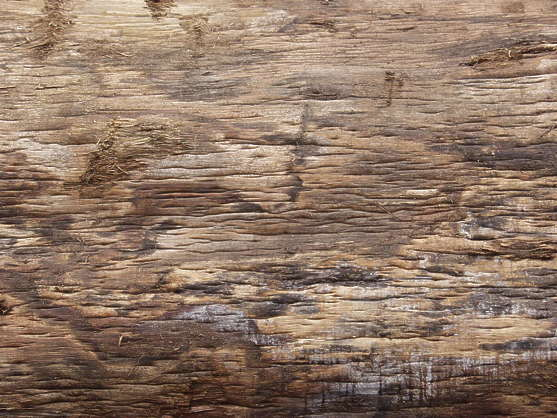 wood bark closeup bare naked