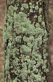 tree mossy bark