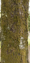 tree bark moss mossy trunk japan