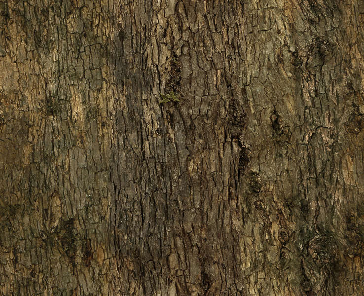 Barkdecidious0107 Free Background Texture Tree Bark