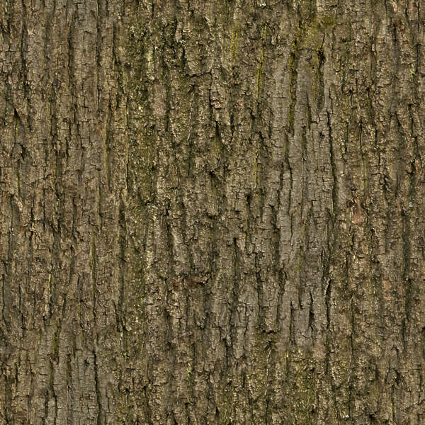 Barkdecidious0164 Free Background Texture Wood Bark