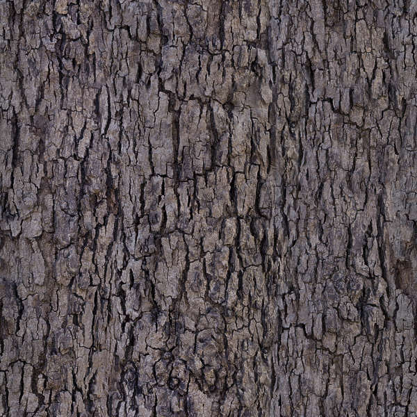 Barkdecidious0194 Free Background Texture Tree Bark
