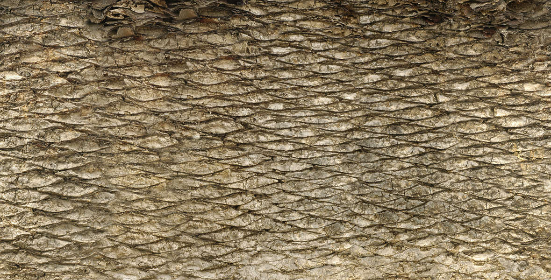 Barkpalm0052 Free Background Texture Palm Tree Bark