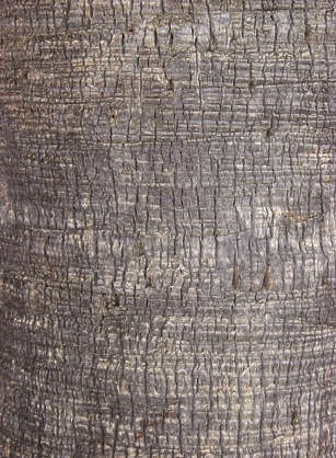 Barkpalm0008 Free Background Texture Wood Bark Palm
