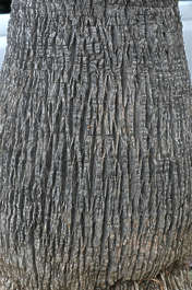 bark trunk palm