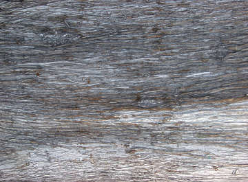 wood bark pine rough fine