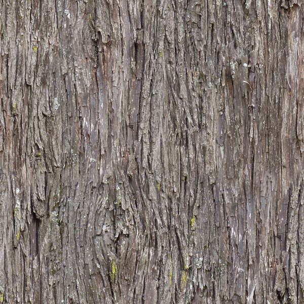 Barkpine0009 Free Background Texture Wood Bark Pine
