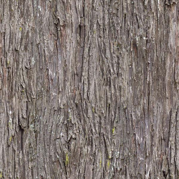 Barkpine0009 Free Background Texture Wood Bark Pine