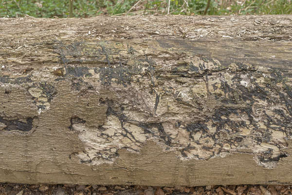 wood bark rough bare stripped old