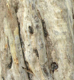 tree bark closeup