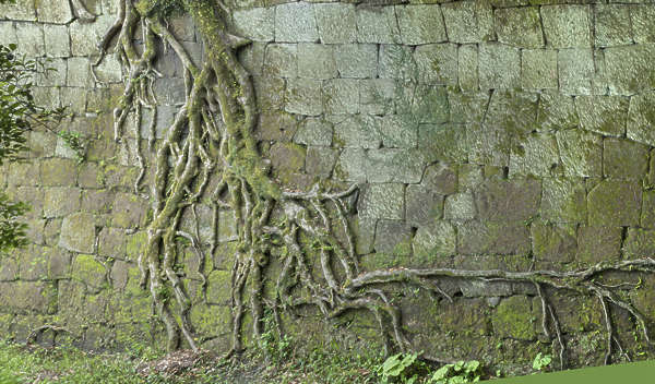 brick bricks medieval old castle wall Japan Japanese root roots treeroots vine vines jungle